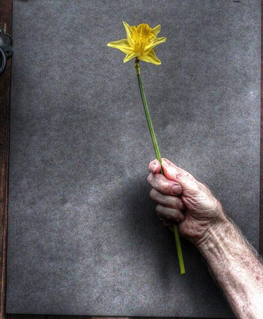 2nd print Daffodil by Keith Bagnall